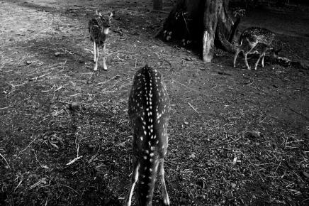 A Forgotten Zoo-10