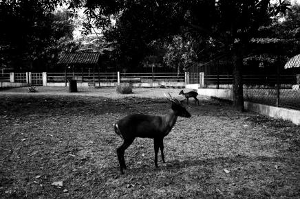 A Forgotten Zoo-11