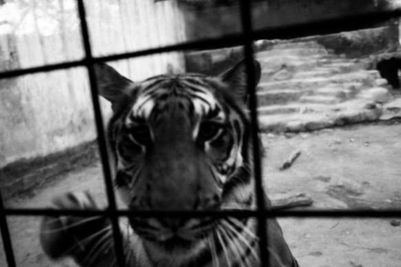 A Forgotten Zoo-12