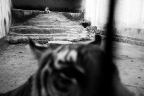 A Forgotten Zoo-13