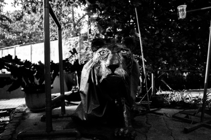 A Forgotten Zoo-16