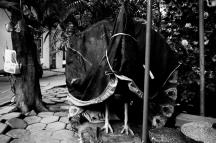 A Forgotten Zoo-17