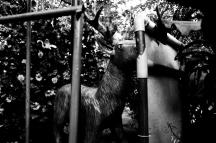 A Forgotten Zoo-18