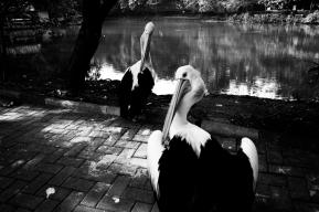 A Forgotten Zoo-2