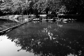 A Forgotten Zoo-3