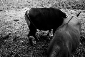 A Forgotten Zoo-6