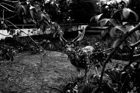 A Forgotten Zoo-8