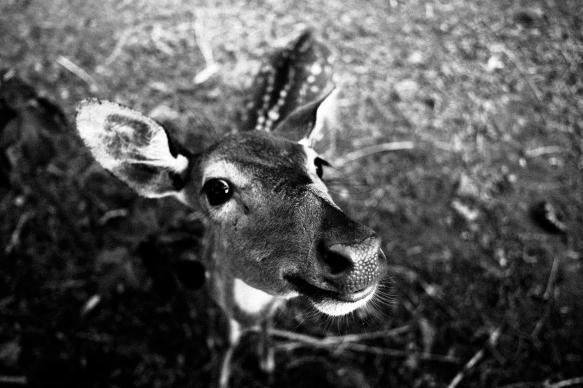 A Forgotten Zoo-9